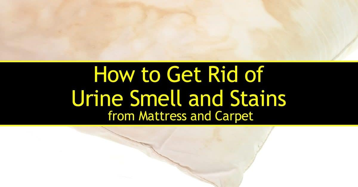 how to clean your mattress from urine