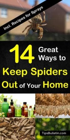 14 Great ways to keep spiders out of your home naturally - with recipes for homemade peppermint and vinegar repellant sprays. Quick and natural DIY ways to get rid of spiders at home, garage, basement, porch or yard. #spiders #repel #spider #repellant