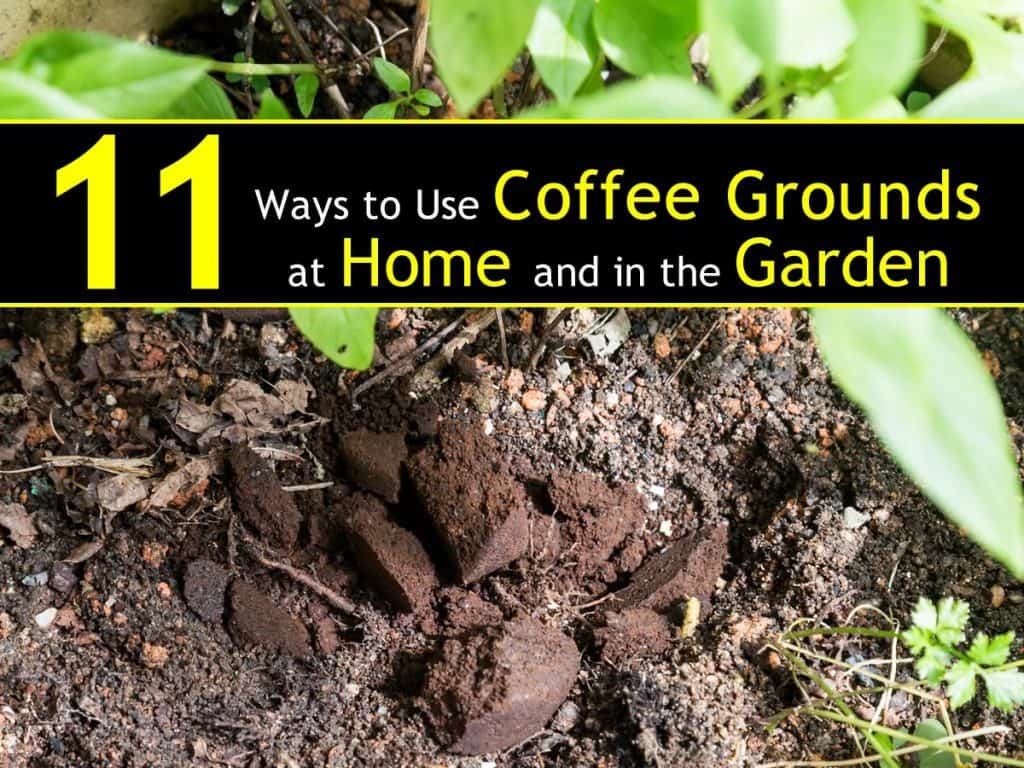 11 ways to use coffee grounds in the garden - How to use coffee grounds in garden ...