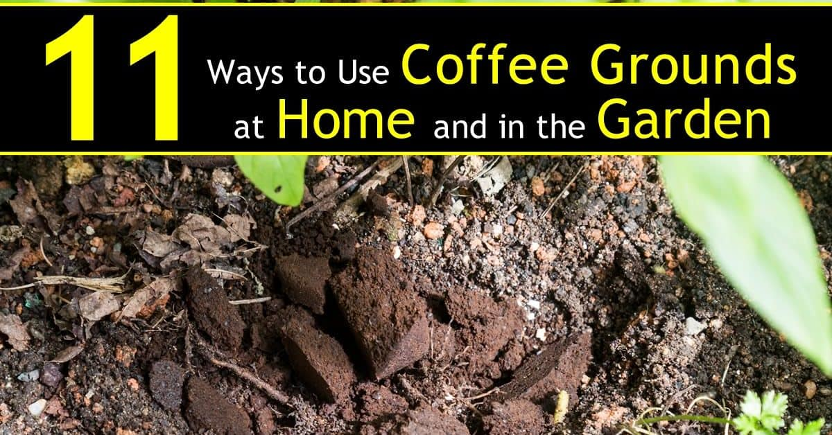 Repurpose coffee grounds (tea bags and coffee filters too!) | ecogreenlove