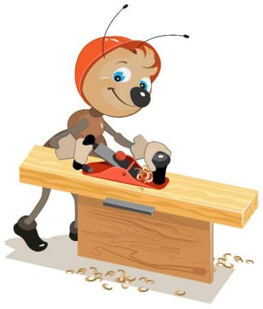 Having a problem with carpenter ants? Here are a few tips on how to get rid of them.