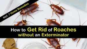 how to get rid of roaches without an exterminator titleimg1