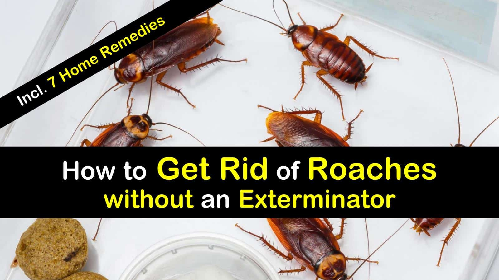 how to get rid of roaches without an exterminator 7 home remedies. Black Bedroom Furniture Sets. Home Design Ideas