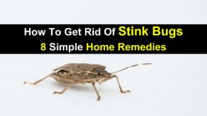How To Get Rid Of Stink Bugs – 8 Simple Home Remedies