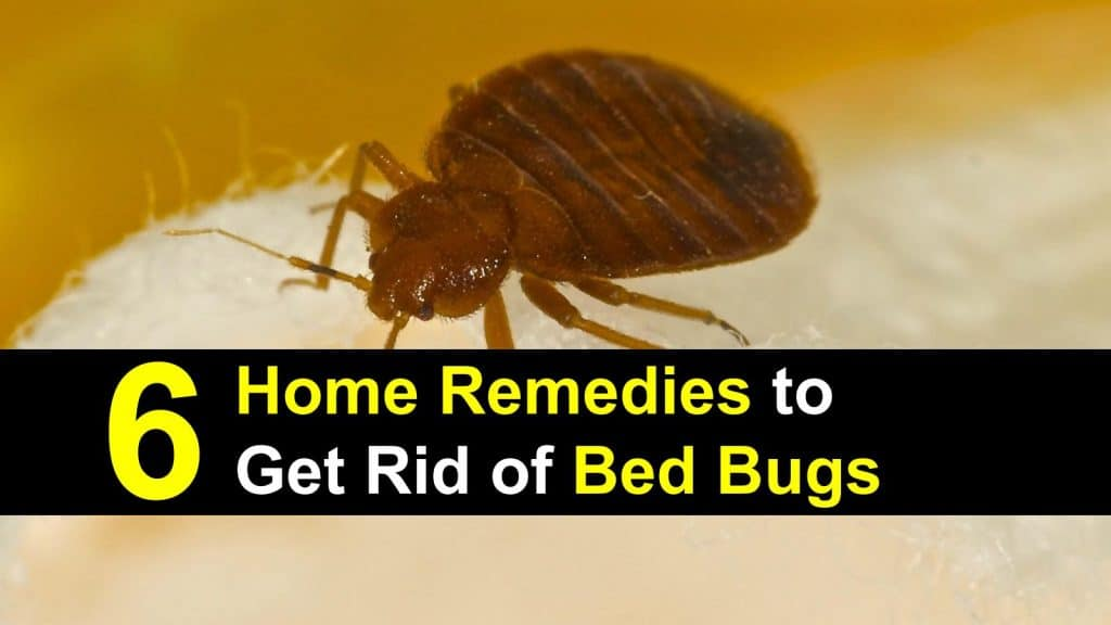 6 Home Remedies To Get Rid Of Bed Bugs Incl Recipes