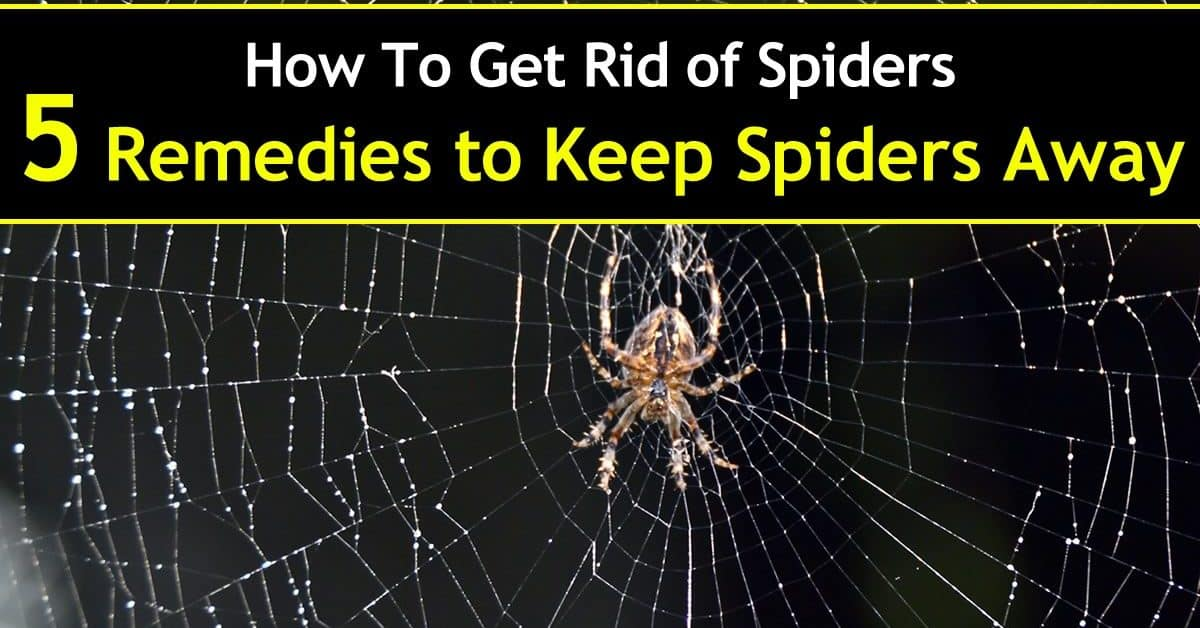 how to get rid of spiders 5 remedies to keep spiders away