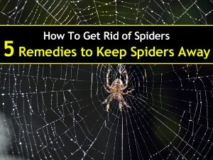 How To Get Rid of Spiders – 5 Remedies to Keep Spiders Away