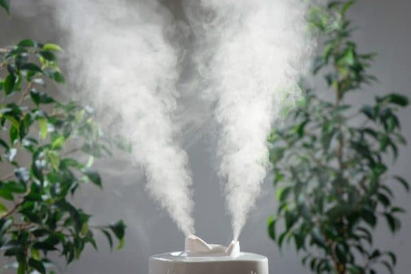 Natural remedies for spider mites: use a humidifier.