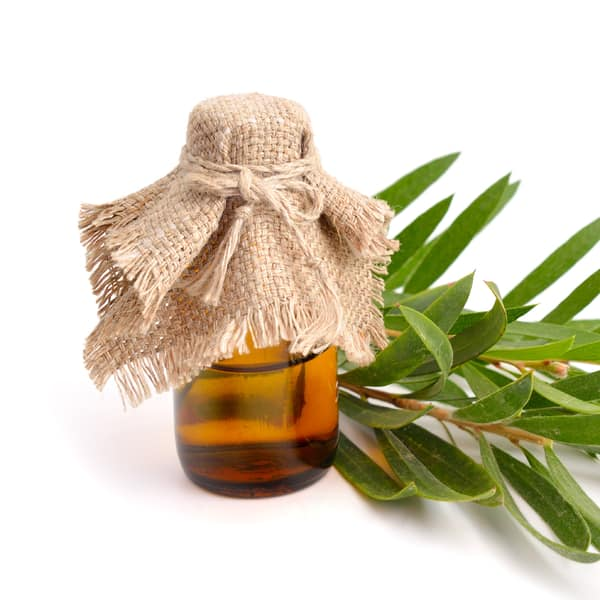 use tea tree oil to remove mold