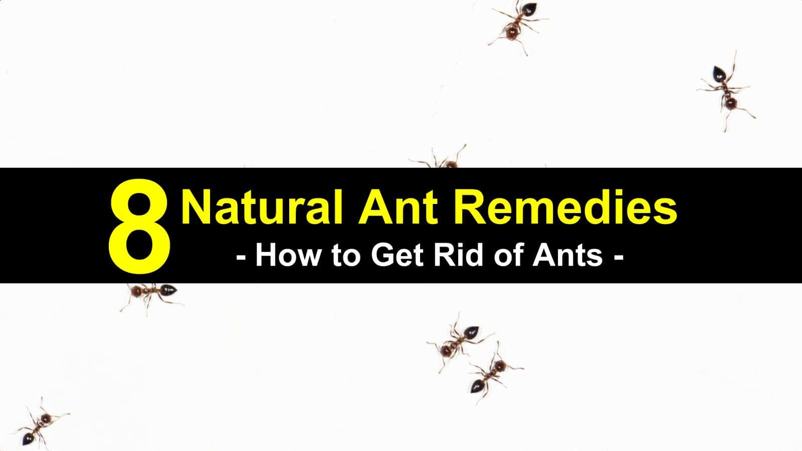 8 Natural Ant Remedies How To Get Rid Of Ants