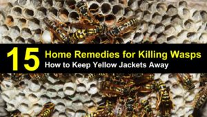 How to Keep Yellow Jackets Away from Your Home – 15 Home Remedies for Killing Wasps