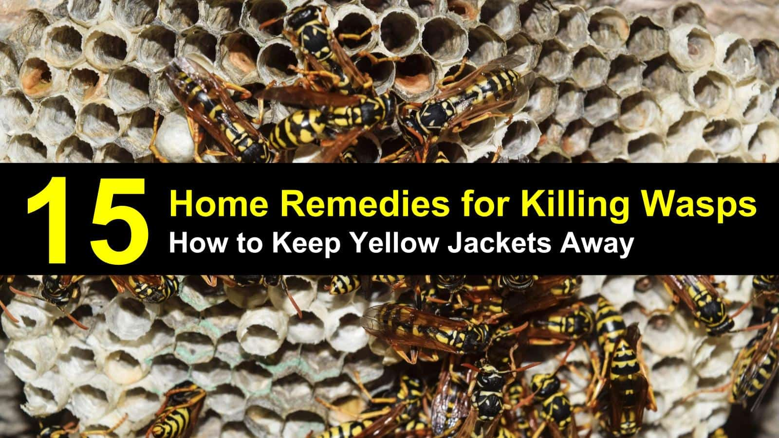 Small yellow jackets in the ground - How To Keep Yellow Jackets Away Titleimg