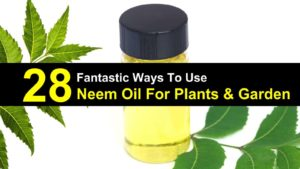 28 Fantastic Ways To Use Neem Oil For Plants & Garden
