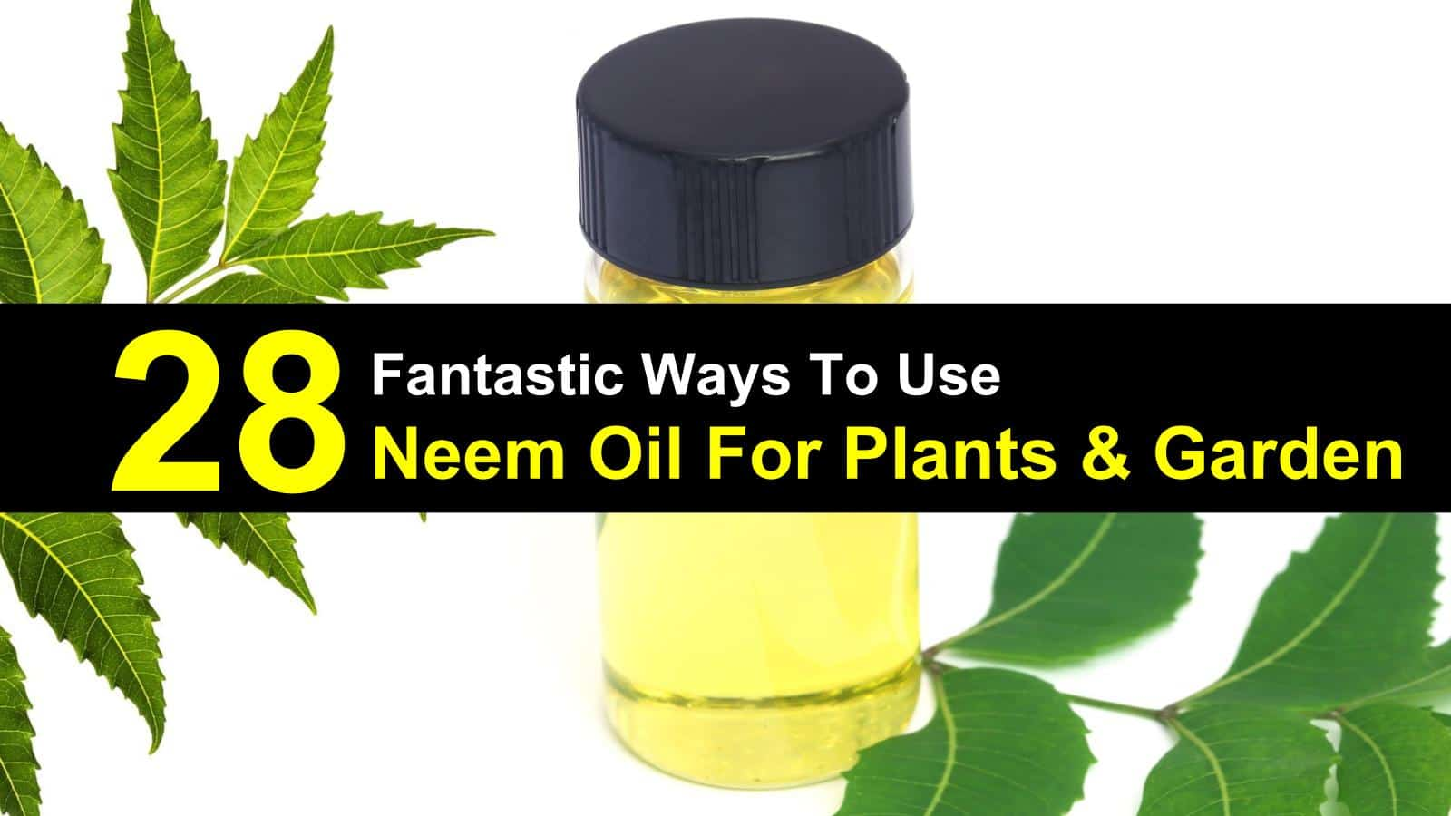 Neem Oil uses for plants & Garden | ecogreenlove