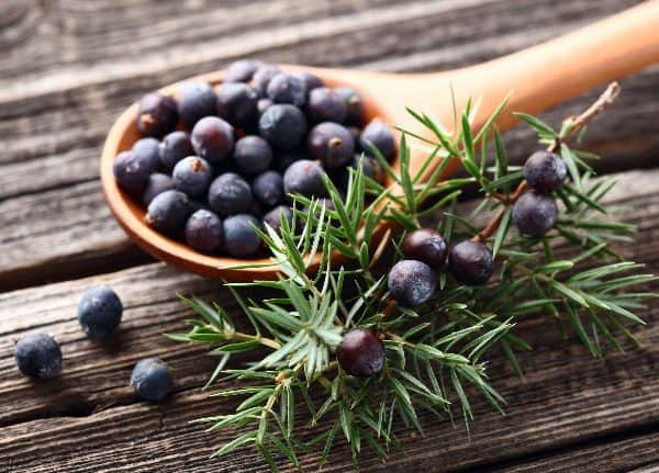 Juniper essential oil is a fantastic essential oil for cough and cold, as it can be taken topically, orally, or via aromatherapy.