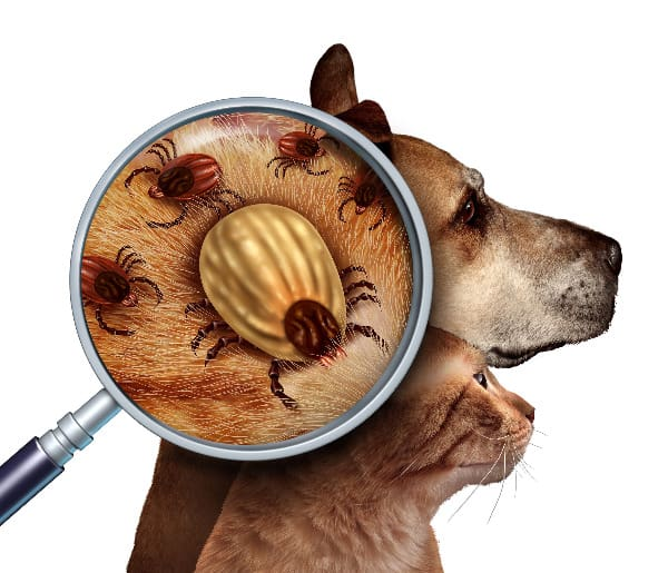 The witch hazel plant repels ticks, so use it to keep your pets tick-free.