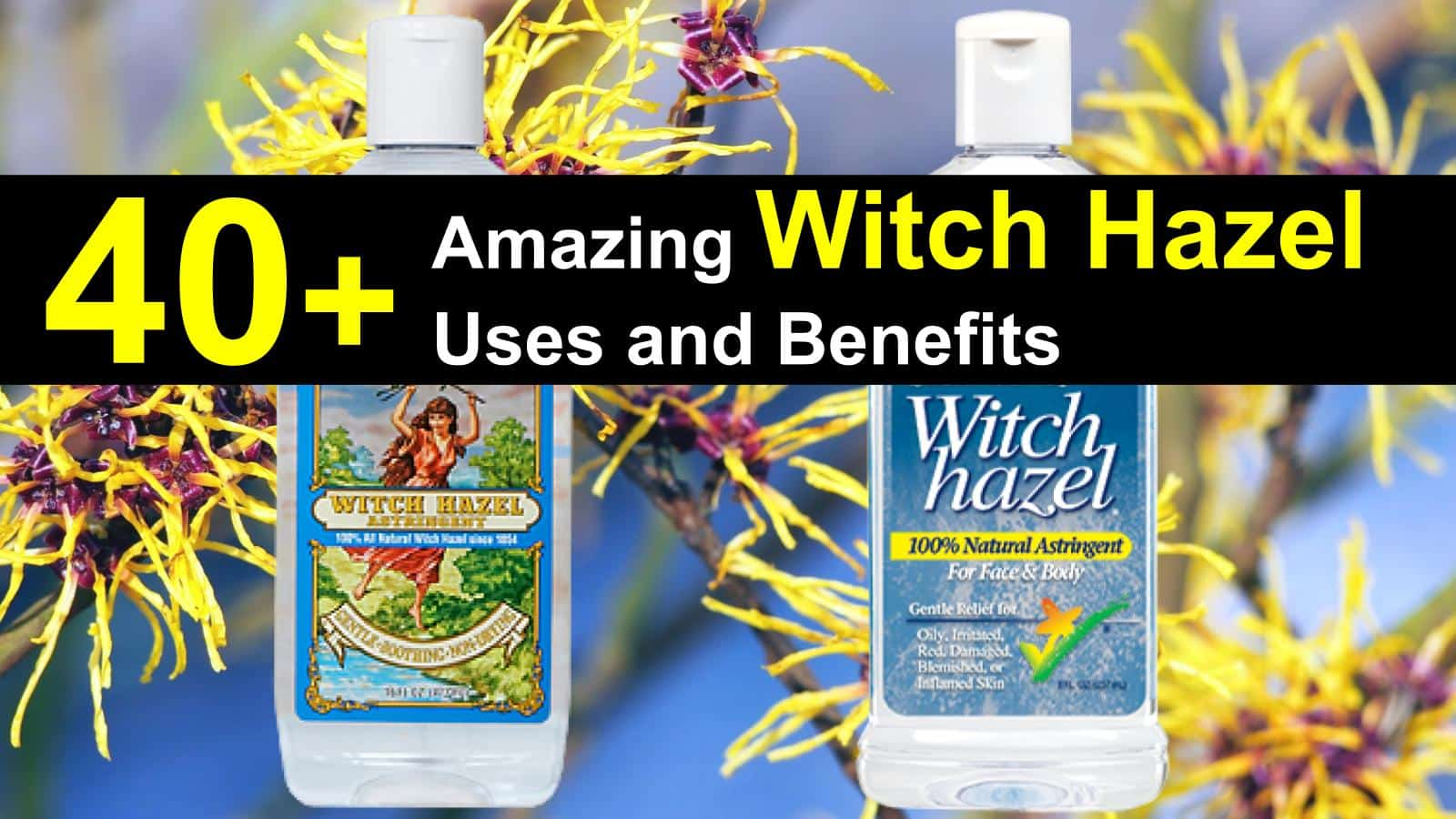 witch hazel uses title img