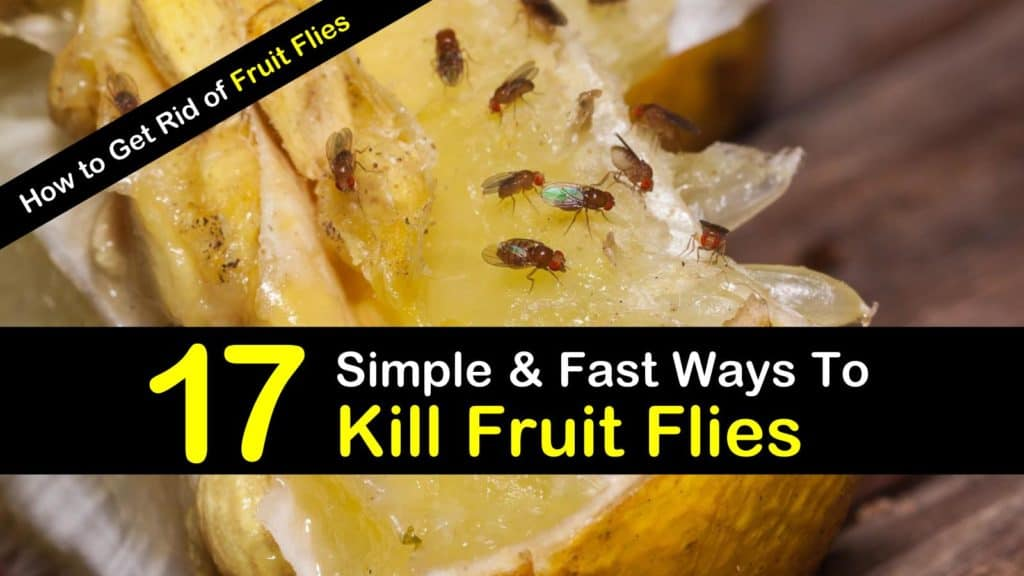 How To Get Rid Of Fruit Flies 17 Simple Amp Fast Ways To