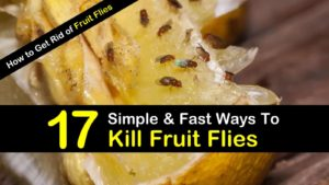 How to Get Rid of Fruit Flies – 17 Simple & Fast Ways To Kill Fruit Flies and Flies in Your House