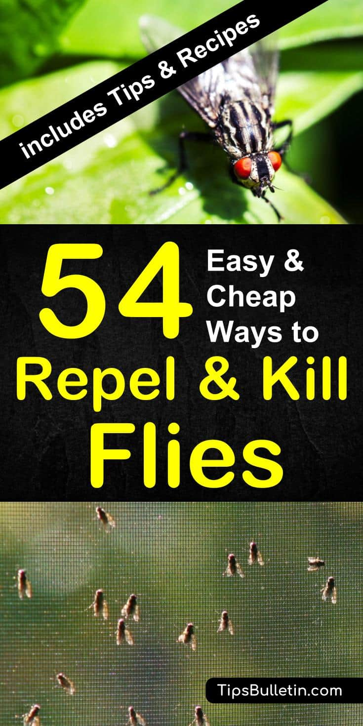 Find out how to keep flies away in a natural way. With 54 ways to repel and kill houseflies, mosquitoes, and gnats. Includes natural DIY fly repellant recipes and plants that repel flies naturally from food and dogs. #fly #keepaway #repel #repellent #houseflies #mosquitoes