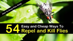 How To Keep Flies Away – 54 Easy and Cheap Ways To Repel and Kill Flies