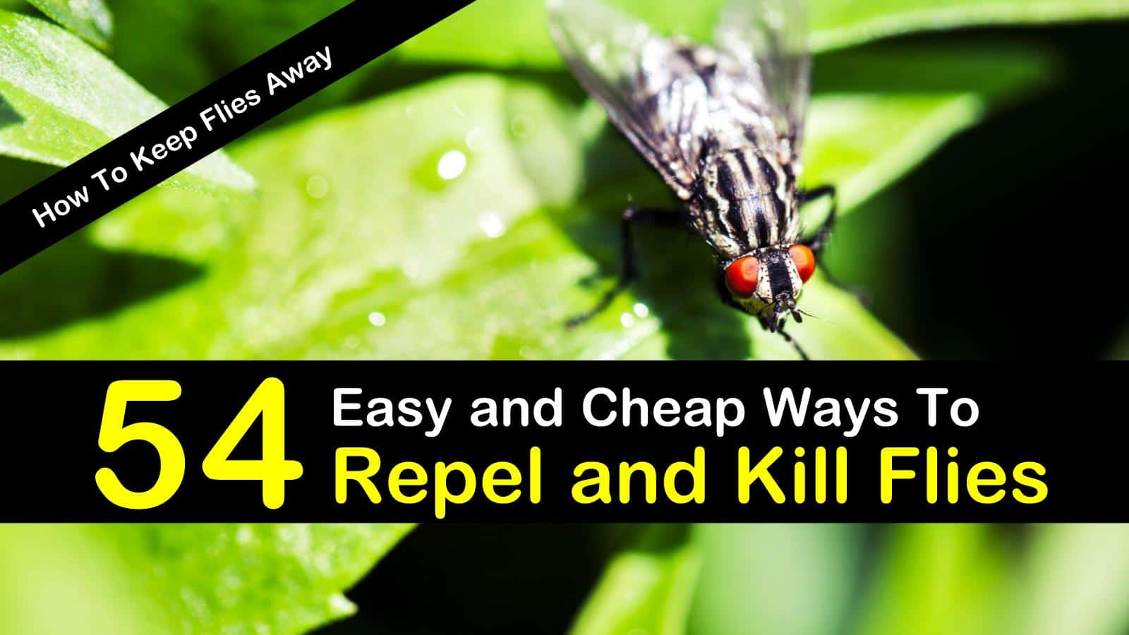 Home remedy to get rid of flies in the house