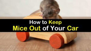 How To Keep Mice Out Of Your Car titleimg1