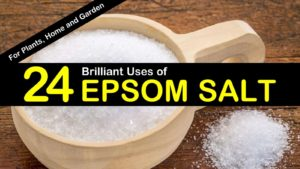 24 Brilliant Uses of Epsom Salt for Plants, Home and Garden