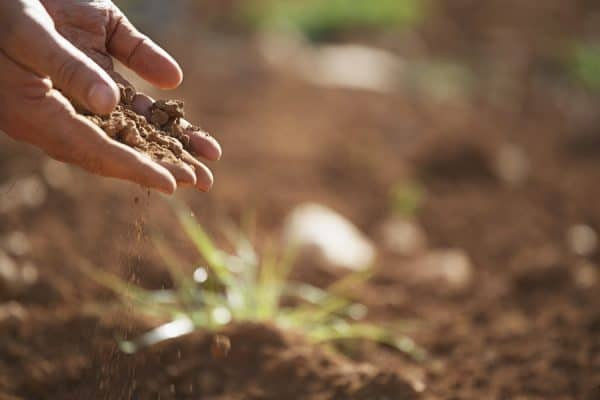 diatomaceous earth added on your compost pile for a better garden soil