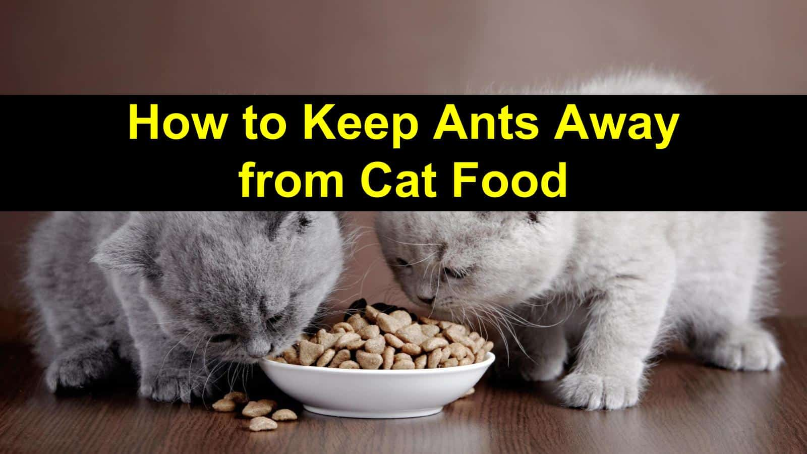 title img for how to keep ants away from cat food post
