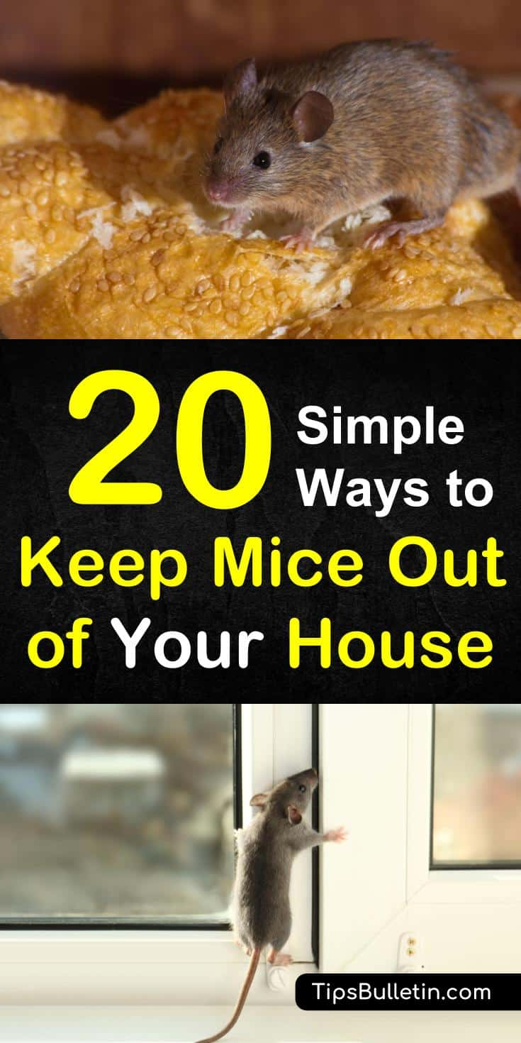 Find out 20 ways to keep mice out of your house with these DIY pest control techniques. Learn how to get rid of pesky rodents using peppermint oil and baking soda. Learn the unmistakable signs that signal your home may have a mouse problem. #micerepellent #getridofmice