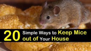 how to keep mice out of your house titleimg1