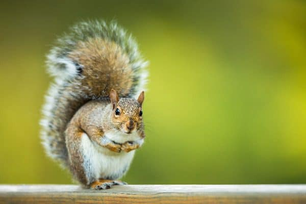 Want to know how to keep squirrels away from bird feeders? Keep reading to find out.