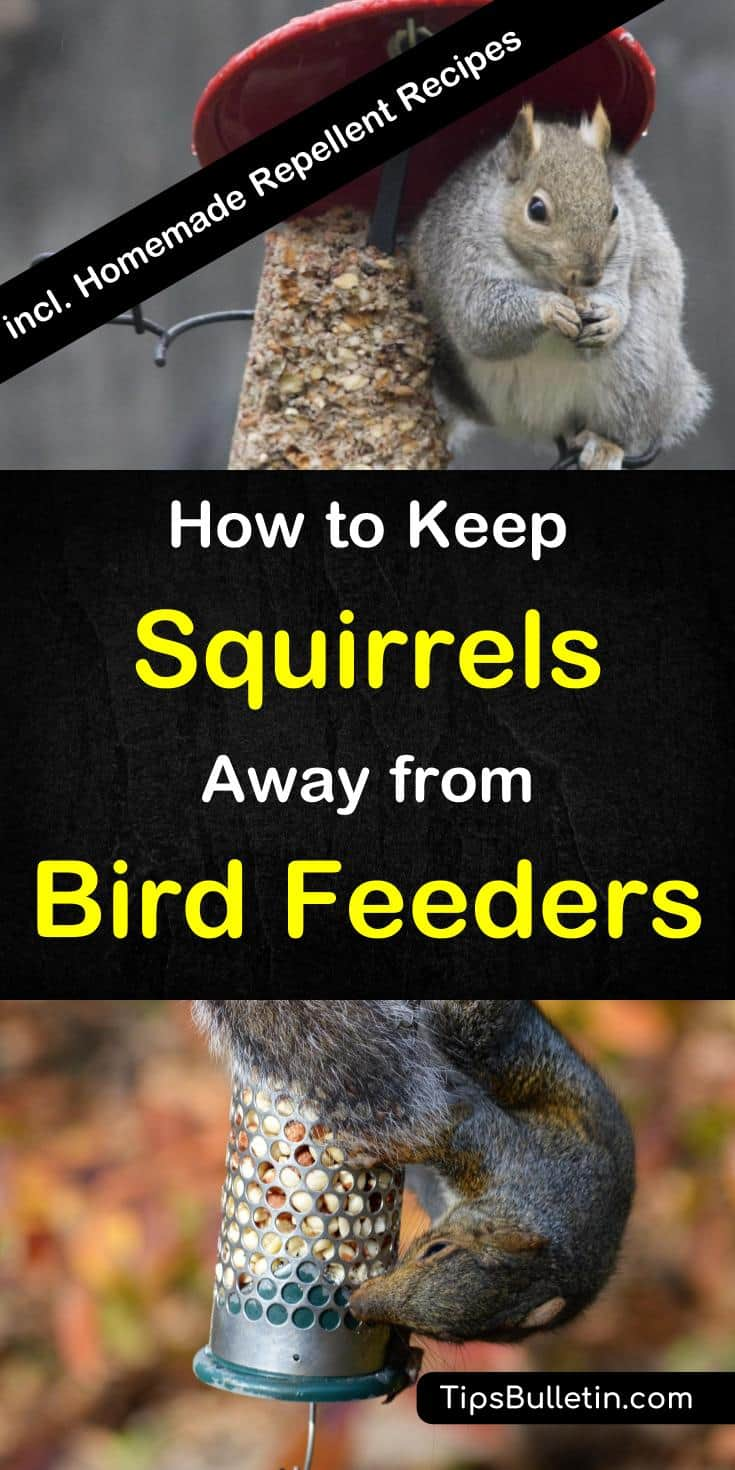 hang off feeders hanging feeder how a keep to bird hangingfeeders squirrels
