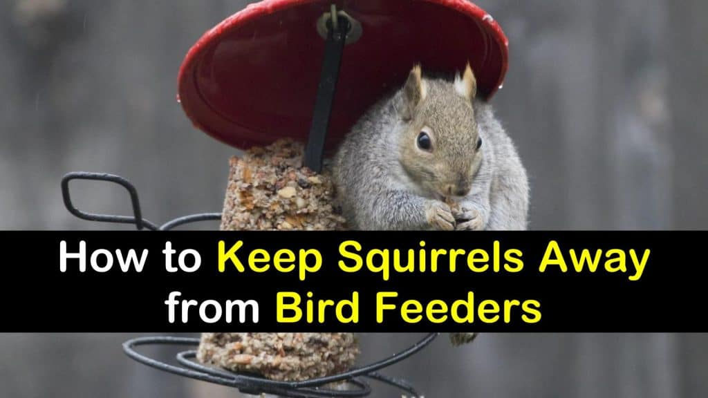 feeders feeder to keep of how pin squirrels out your bird