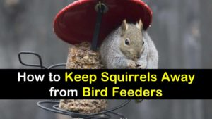 In this article, we're going to cover how to keep squirrels away from bird feeders.