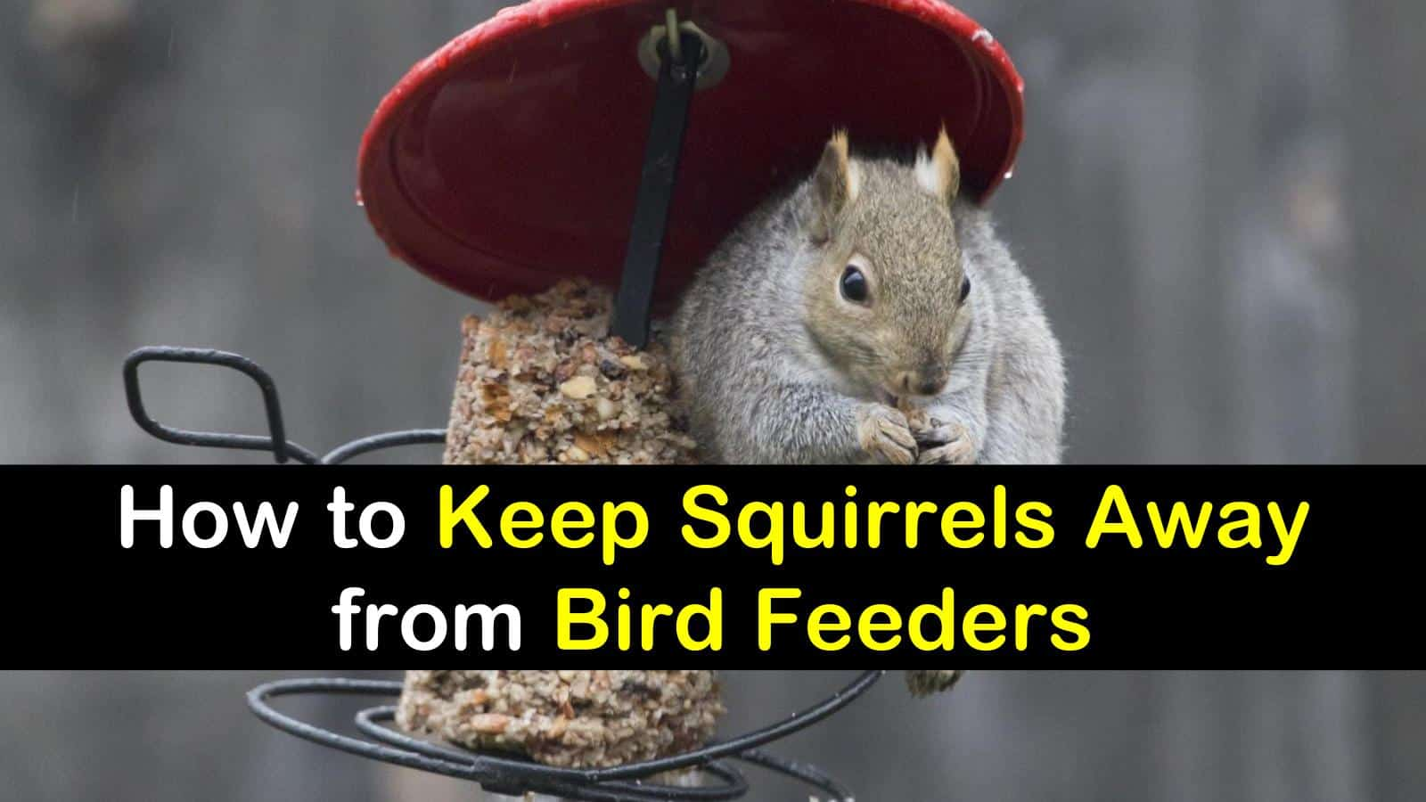 squirrels ado how keep off your feeders much to feeder bird about dsc somethin friday april