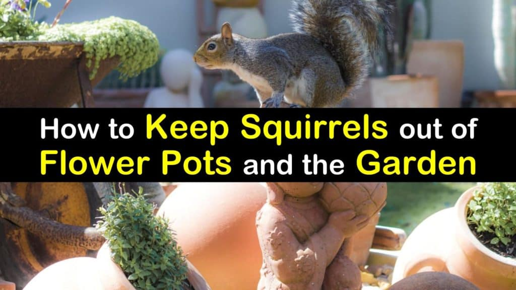 How to keep squirrels out of flower pots and the garden - How to keep squirrels away from garden ...