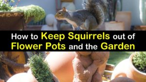 How to Keep Squirrels out of Flower Pots and the Garden titleimg1