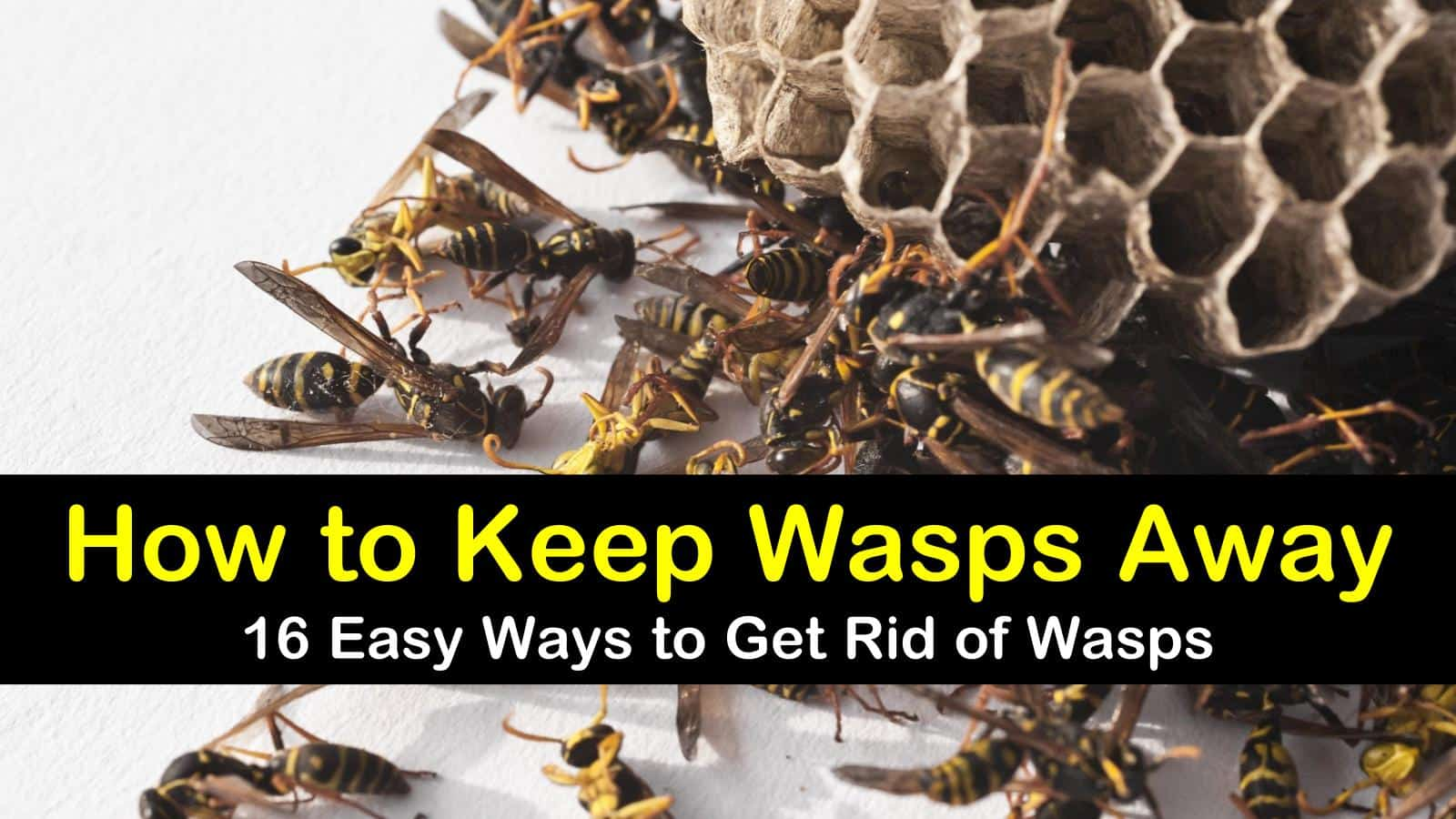 how to keep wasps away titlimg
