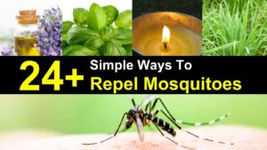 24+ Simple Ways To Repel Mosquitoes