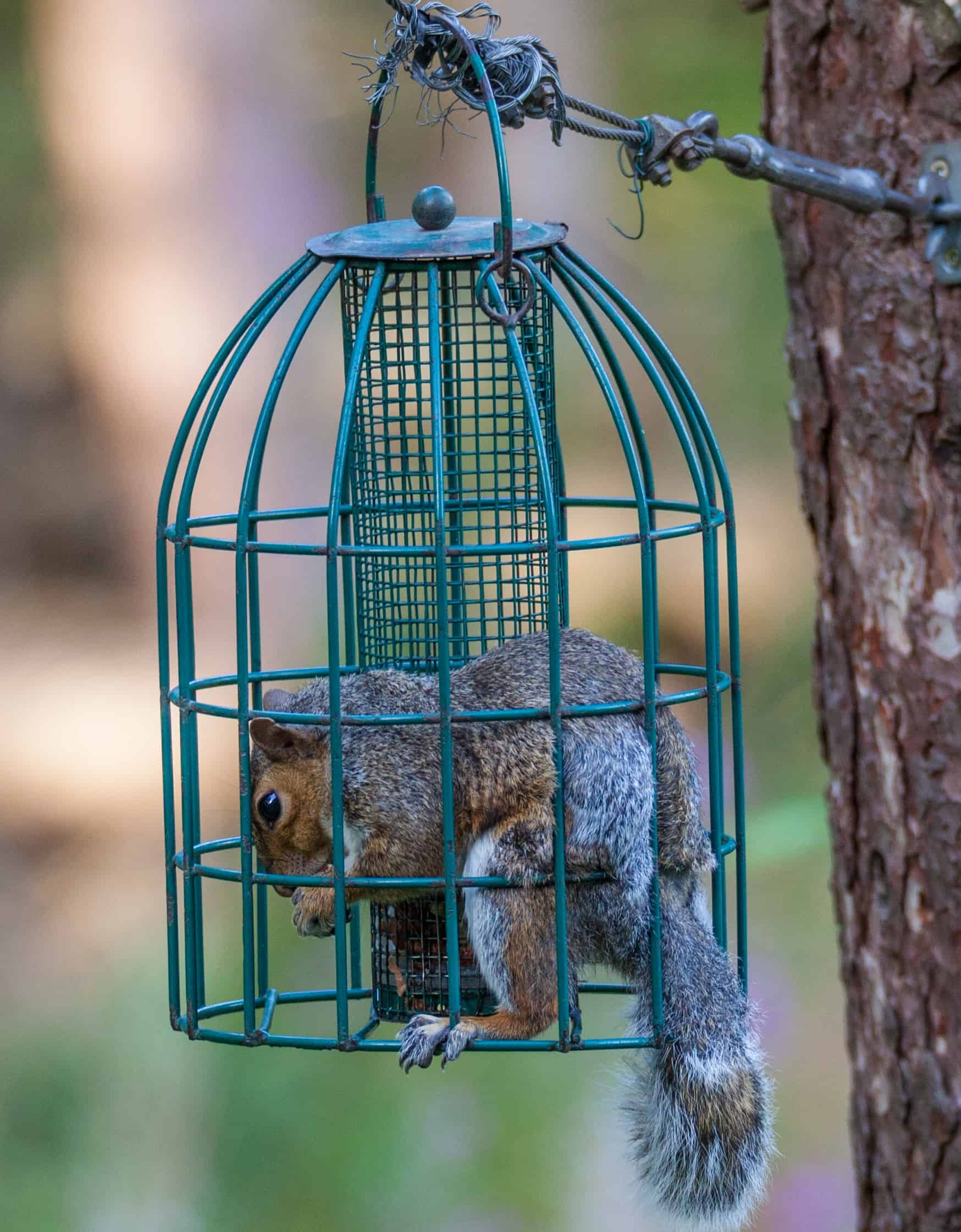 feeders attachment proof bird lowes resistant feeder squirrel