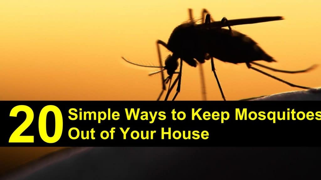 How To Get Rid Of Mosquitoes In Your House Naturally