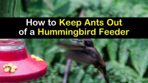 How to Keep Ants Out of a Hummingbird Feeder titleimg1