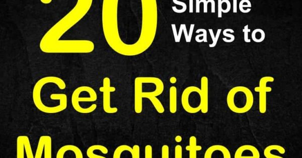 How to Keep Mosquitoes Away - 20 Simple Ways to Get Rid of