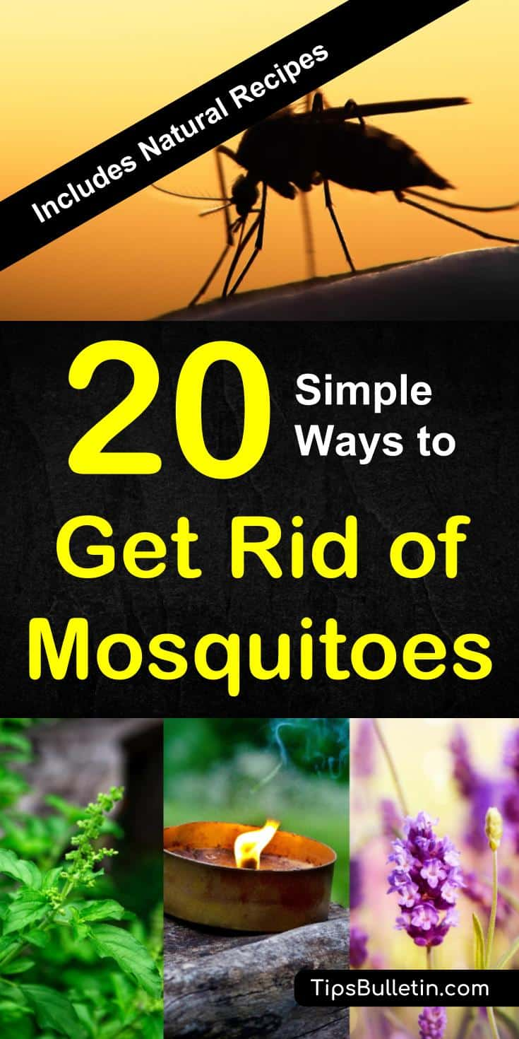 How to keep mosquitoes away with 20 easy ways. Includes natural recipes and tips for homemade mosquito repellents, essential oils, traps, nets, and plants. Perfect to get rid of mosquitoes from yards, decks, garden campfires or inside your house. #mosquitoes #keepaway #getridof #backyard