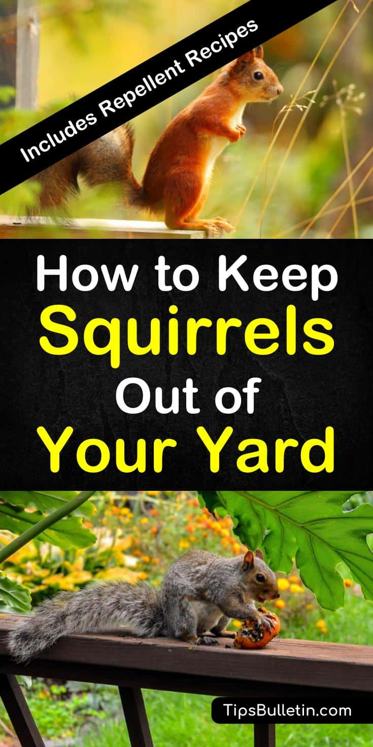 Tips and tricks for how to keep squirrels out of your yard. Learn the best ways to keep pesky squirrels from getting into your bird feeders and ruining your flower beds using tried and true methods and DIY natural squirrel repellent. #keepsquirrelsout #squirrelfreeyard