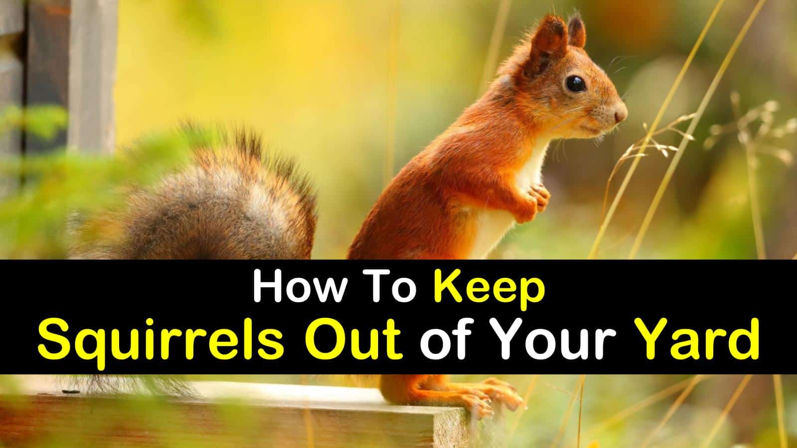 How to Keep Squirrels Out of Your Yard titleimg1
