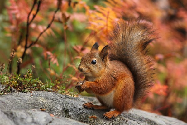 Find out how to keep squirrels out of your yard because they can cause damage to your lawn and property.