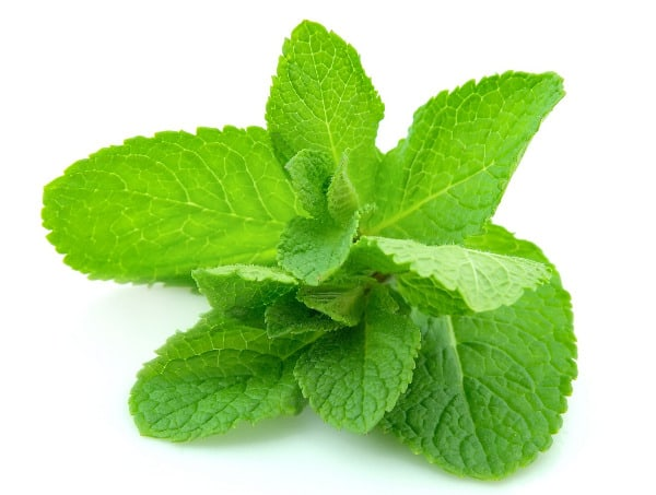 Peppermint is one way to repel squirrels from your garden.
